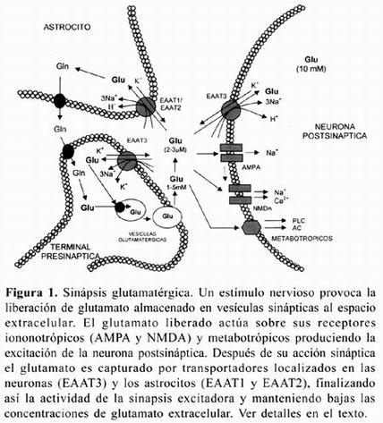 Bisfenol a metabolismo